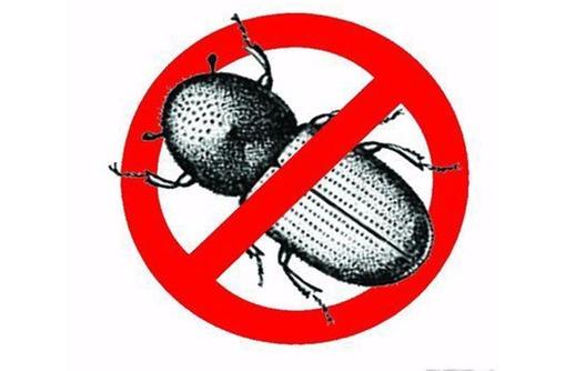 Уничтожение короеда в Алупке эффективно, профессионально, безопасно и с гарантией? Звоните нам!, фото — «Реклама Алупки»