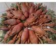Свежие речные и озёрные раки, фото — «Реклама Белогорска»