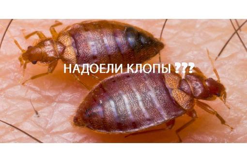 КЛОПЫ! Загрызли клопы? Не тратьте деньги на бытовую химию, не поможет, как и утилизация мебели!Жмите, фото — «Реклама Армянска»