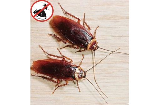 Тараканы! У Вас завелись такие не приятные соседи? Бытовая химия не поможет! Звоните нам! Гарантия!, фото — «Реклама Армянска»