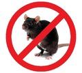 Крысы? Вас замучило такое не приятное соседство? Профессиональное уничтожение крыс! Безопасно! Жмите - Клининговые услуги в Крыму
