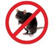 Крысы стали Вашими соседями? не приятно и опасно! Профессиональная дератизация! Безопасно! Жмите!, фото — «Реклама Белогорска»