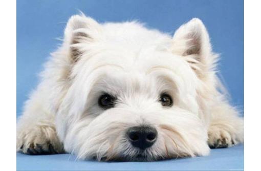 Услуги грумера. Профессиональная стрижка кошек и собак., фото — «Реклама Севастополя»