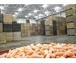 Холодильные камеры для хранения овощей, кратофеля, лука, капусты,, фото — «Реклама города Саки»
