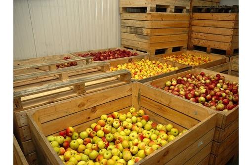 Холодильная камера и агрегат для яблок в Феодосии и КРыму. Поставка, монтаж, сервис. Фруктохранилище, фото — «Реклама Феодосии»
