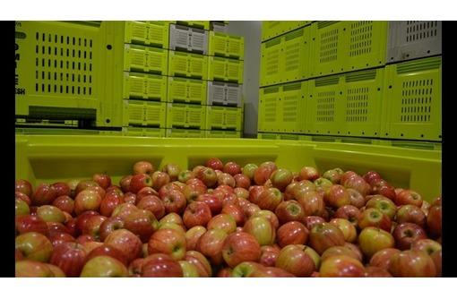 Монтаж холодильных агрегатов для яблок в Крыму, фото — «Реклама Старого Крыма»