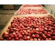 Холодильная камера для яблок. Холодильный агрегат для яблок. Проектирование, продажа, монтаж, сервис, фото — «Реклама Бахчисарая»