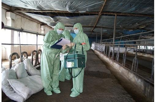 Обеззараживание и дезинфекция складов, овощехранилищ, зернохранилищ, элеваторов, фото — «Реклама Севастополя»