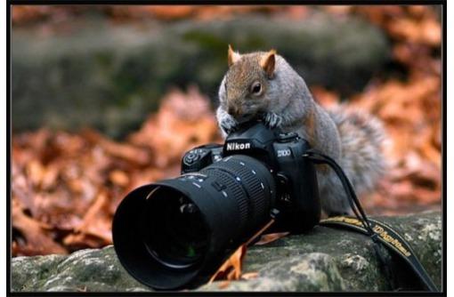Профессиональная фото и видеосъемка. Высокое качество по доступной цене, фото — «Реклама Севастополя»