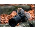 Профессиональная фото и видеосъемка. Высокое качество по доступной цене - Фото-, аудио-, видеоуслуги в Севастополе