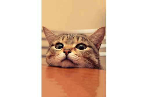 Стрижка собак и кошек, груминг, тримминг, фото — «Реклама Севастополя»