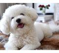 Профессиональный груминг, повседневные и модельные стрижки для собак и кошек - Груминг-стрижки в Крыму