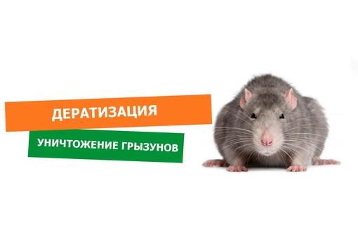 Крысы или мыши мешают спокойно жить? Обращайтесь к нам, и Вы забудете об этой проблеме. Гарантия., фото — «Реклама Севастополя»