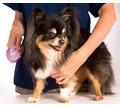 Стрижка для кошек и собак. Услуги для ваших любимцев по доступным ценам. - Груминг-стрижки в Симферополе
