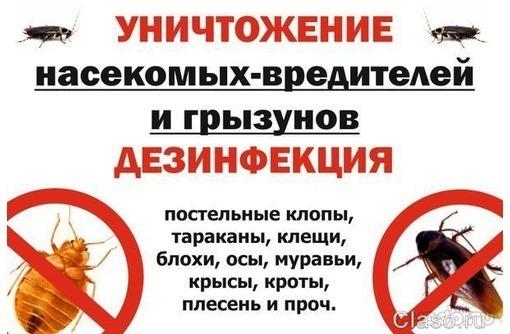 СевДезинфекция!  Борьба с вредителями!, фото — «Реклама Севастополя»