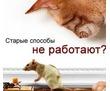 ДЕРАТИЗАЦИЯ, круглосуточный выезд мастера!, фото — «Реклама Севастополя»