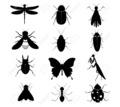 Thumb_big_28524005-insectos-siluetas-colecci_n