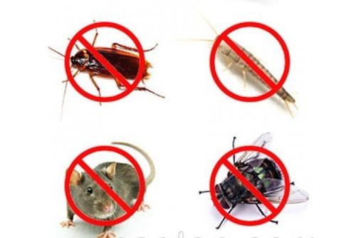 Уничтожение тараканов, клопов, грызунов, плесени, фото — «Реклама Севастополя»