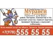 Однодневные автобусные экскурсии по Крыму, фото — «Реклама Севастополя»