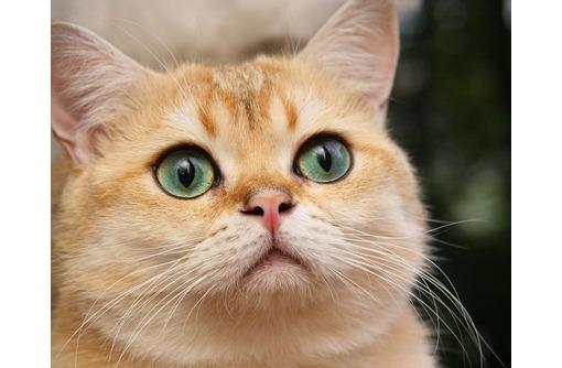 Груминг, профессиональная стрижка собак и кошек, фото — «Реклама Севастополя»