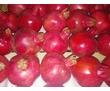 Продажа овощей, фруктов и цитрусовых!!!!, фото — «Реклама Севастополя»