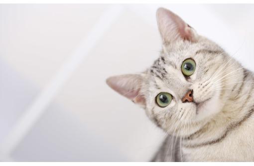 Стрижка для кошек и собак. Услуги для ваших любимцев по доступным ценам, фото — «Реклама Севастополя»