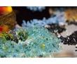 Распродажа сувениров и подарков Ялта * Крым, фото — «Реклама Ялты»
