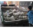 Вывоз мусора,хлама,старой мебели, фото — «Реклама Севастополя»