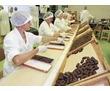 Упаковщики на производство., фото — «Реклама Старого Крыма»