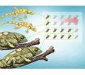 Сверчки живые для рептилий - Рептилии в Симферополе