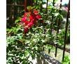 Отдых в Канаке пансионат Зеленый Луч, фото — «Реклама Алушты»