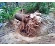 Озеленение, высадка и обрезка деревьев, газоны, ландшафты, системы полива., фото — «Реклама Севастополя»