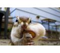 Thumb_big_zapas