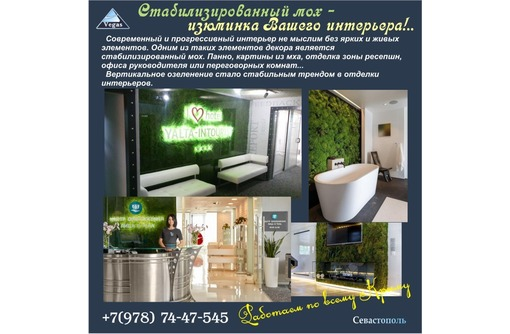 стабилизированный мох в интерьере, фото — «Реклама Севастополя»
