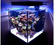 Морской аквариум на заказ Севастополь, фото — «Реклама Севастополя»