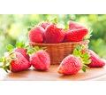 Thumb_big_strawberry-fresh-berries-2338