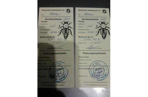 Пчелы, пчеломатки Карника, фото — «Реклама Симферополя»