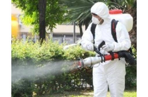 Безопасная дезинфекция против бактерий и вирусов круглосуточно, фото — «Реклама Севастополя»