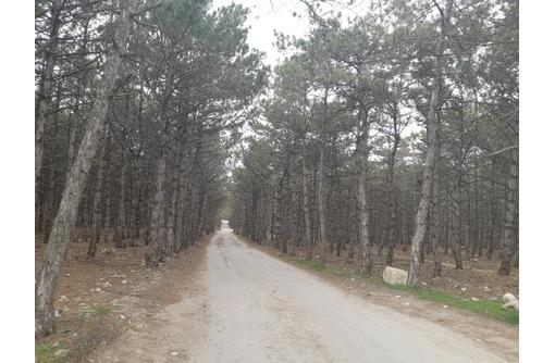Участок Фиолент р-н 5го км кооп.Чайка у леса 8сот, фото — «Реклама Севастополя»