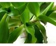 Лекарственные растения - алоэ, каланхоэ, фото — «Реклама Севастополя»
