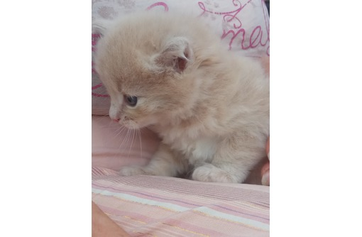 Очень милый ,симпатичный котёнок -ищет себе добрых, любящих хозяев!, фото — «Реклама Севастополя»