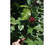 Продается Дача 63 кв (5 соток), фото — «Реклама Севастополя»