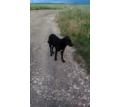 Красивые щенята в добрые руки - Отдам в добрые руки в Симферополе