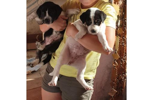Отдам щенков, возраст 1 месяц, фото — «Реклама Красноперекопска»