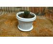 Продам кактус с мягкими иголками, фото — «Реклама Севастополя»