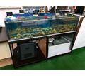 Витрина аквариум для устриц, крабов, омаров, гребешков. Продажа и изготовление в Симферополе - Продажа в Симферополе