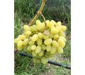 Виноград столовый оптом в Севастополе - Эко-продукты, фрукты, овощи в Севастополе