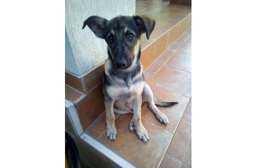Самый лучший пёсик ищет добрых хозяев, фото — «Реклама Севастополя»