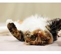 Груминг. Комплексный уход за кожей и шерстью собак и кошек. - Груминг-стрижки в Симферополе
