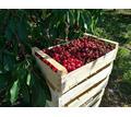 Ящики деревянные шпоновые - Сельхоз услуги в Красногвардейском